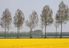 Landschaft im Polder Stockbild