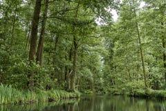 Landschaft im Spreewald in Brandenburg in Deutschland Stockbild