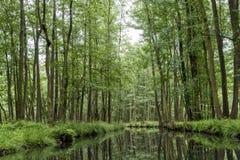 Landschaft im Spreewald in Brandenburg in Deutschland Lizenzfreie Stockbilder