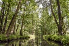 Landschaft im Spreewald in Brandenburg in Deutschland Lizenzfreies Stockfoto