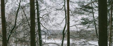 Landschaft im Wald Lizenzfreies Stockbild