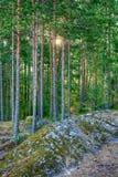 Landschaft im Wald Stockbilder