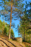 Landschaft im Wald Lizenzfreie Stockfotos