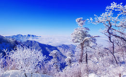 Landschaft im Winter, Deogyusan in Korea Stockbild