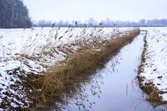 Landschaft im Winter mit Schilf Lizenzfreie Stockfotos
