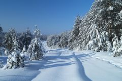 Landschaft im Winterholz Stockfotografie