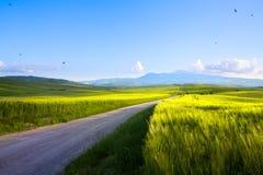 Landschaft Italiens Toskana; Ackerland- und Landstraße; Rollen Lizenzfreie Stockfotografie