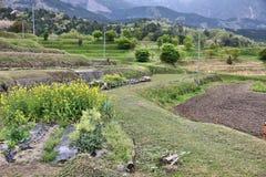 Landschaft in Japan Lizenzfreies Stockfoto