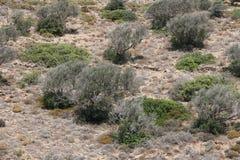 Landschaft in Kreta, Griechenland Lizenzfreies Stockfoto