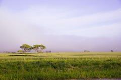Landschaft in La Pampa, Argentinien Lizenzfreies Stockbild