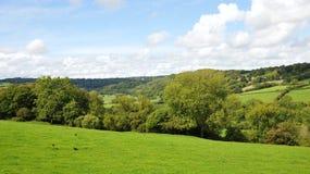Landschaft-Landschaft der grünen Felder Lizenzfreie Stockbilder