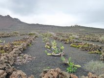 Landschaft in Lanzarote Stockbilder