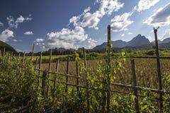 Landschaft in Laos Stockbild