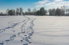 Landschaft mit Abdrücken auf einem frischen Schnee Lizenzfreie Stockbilder