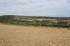 Landschaft mit Ackerland- und Waldgetreideernten Lizenzfreies Stockbild