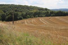 Landschaft mit Ackerland und Waldland Stockfotografie