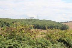 Landschaft mit Ackerland und Waldland Stockfoto