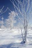 Landschaft mit Bäumen Lizenzfreie Stockfotografie
