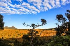 Landschaft mit Bäumen Lizenzfreies Stockbild