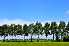 Landschaft mit Bäumen Stockbilder