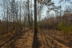 Landschaft mit Bäumen Baumschattensonne, die in der Abendleuchte scheint stockbild
