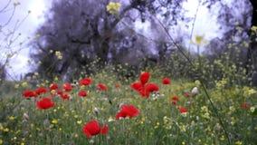 Landschaft mit Bäumen und Mohnblumen stock video footage