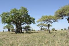 Landschaft mit Baobabbaum in Afrika Lizenzfreies Stockbild
