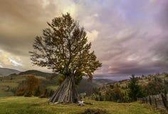 Landschaft mit Baum Stockfoto