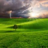 Landschaft mit Baum auf grünem Feld Lizenzfreie Stockbilder