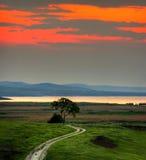 Landschaft mit Baum am Sonnenuntergang Lizenzfreie Stockfotos