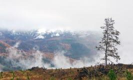 Landschaft mit Baum und nebeligen Bergen Lizenzfreie Stockfotos