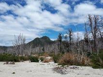 Landschaft mit Berg und trockenen Bäumen stockfotos
