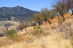 Landschaft mit Bergen und Mandelbäumen Stockfotografie