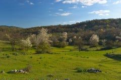 Landschaft mit blühendem Apfelbaum Stockfotos