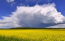 Landschaft mit blühendem Rapsfeld Lizenzfreies Stockbild