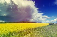 Landschaft mit blühendem Rapsfeld Stockbild