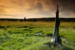 Landschaft mit bleiben vom Baum Stockfotos