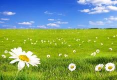 Landschaft mit Blumen Lizenzfreies Stockfoto