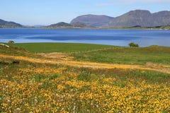 Landschaft mit Blumen nähern sich Wasser Lizenzfreie Stockfotos