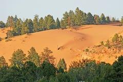 Landschaft mit Dünen und Bäumen lizenzfreie stockbilder