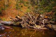 Landschaft mit dem Fluss, der eine Schlucht durchfließt Stockfotos