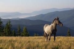 Landschaft mit dem jungen Pferd Stockbilder