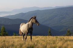 Landschaft mit dem jungen Pferd Lizenzfreies Stockbild