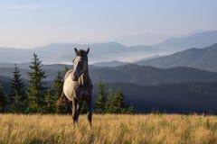 Landschaft mit dem jungen Pferd Stockfoto