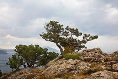 Landschaft mit dem Reliktwacholderbuschwachsen lizenzfreie stockbilder
