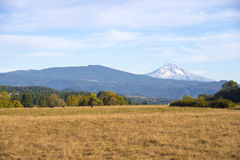 Landschaft mit den Kühen, die auf gelber Wiese weiden lassen Stockfotografie