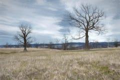 Landschaft mit den trockenen Bäumen gemalt mit Aquarell Lizenzfreies Stockbild