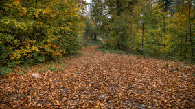 Landschaft mit der Straße bedeckt mit gefallenen Blättern durch Wald Lizenzfreies Stockbild