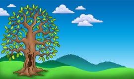 Landschaft mit Eichenbaum Stockbild