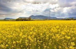Landschaft mit einem Feld von gelben Blumen stockbild